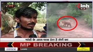 Madhya Pradesh News || Panna में शेर का शिकार LIVE, आसपास के गांवों में दहशत
