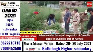 Administration destroyed  vegetation of Cannabis plants in Drugmulla area of Kupwara