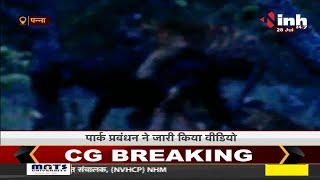 Madhya Pradesh News || Panna, 4 बाघों ने किया नन्हे का शिकार
