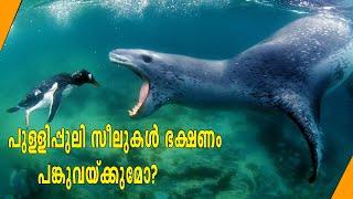 പുള്ളിപ്പുലി സീലുകൾ ഭക്ഷണം പങ്കുവെയ്ക്കുമോ? Leopard seals