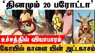 தினமும் 20 பரோட்டா சாப்பிடும் கோயில் காளை | Temple Bull Eat 20 Barota Every Day | Viral News Tamil