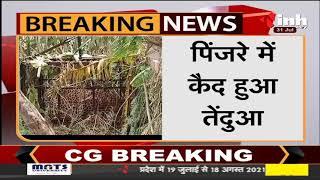 Madhya Pradesh News || Nepanagar, दो महीने से खेतों में घूम रहा तेंदुआ पिंजरे में हुआ कैद