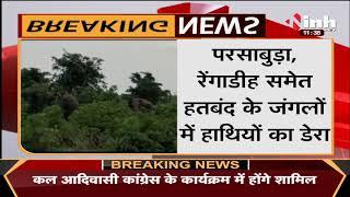 Chhattisgarh News    Dhamtari में हाथियों का उत्पात, फसलों को पहुंचाया नुकसान