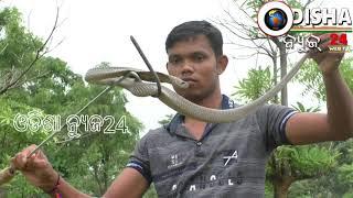 ସାପ ଧରି ଜୀବନ ଲୋକଙ୍କ ବଞ୍ଚାଉଛନ୍ତି ଯୁବକ # ସୁବର୍ଣ୍ଣପୁର #Snake Catcher