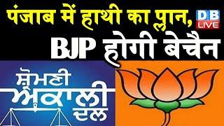 Punjab में BSP का प्लान, BJP होगी बेचैन | BSP का मिशन Punjab तैयार Shiromani Akali Dal | #DBLIVE