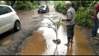 Pernem locals plant trees in the potholes to draw Govt's attention