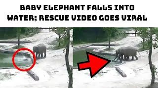 Baby Elephant Falls Into Water; Rescue Video Goes Viral   Catch News