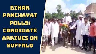 Bihar Panchayat Polls: Candidate Arrives On Buffalo To File Nomination In Katihar | Catch News