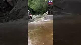 ગુજરાતમાં વરસાદી માહોલ જામ્યો, વાતાવરણ માણવા મગર રસ્તા પર નિકડ્યો  | ABTAK MEDIA