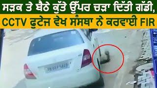 Sultanpur Lodhi 'ਚ Dog ਉੱਪਰ ਚੜਾ ਦਿੱਤੀ Car , CCTV ਫੁਟੇਜ ਵੇਖ ਸੰਸਥਾ ਨੇ ਕਰਵਾਈ FIR