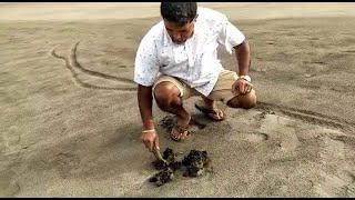 Tar balls now wash up on Morjim beach in North Goa