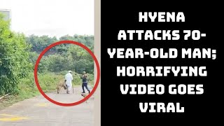 Hyena Attacks 70-Year-Old Man; Horrifying Video Goes Viral | Catch News