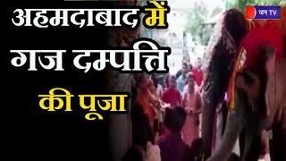 Ahmedabad Gujarat | अहमदाबाद में गज दम्पत्ति की पूजा, दम्पत्ति 40 साल से कर रही है गजराज की पूजा