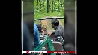 Safari के पास आया Tiger, बाल बाल बची जान !