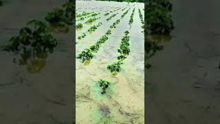 #Delhi के #farmers की #crop का हुआ नुकसान तो #kejriwal ने किया यह काम