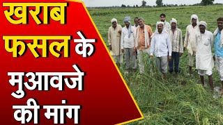 खराब फसलों का मुआवजा नहीं मिलने से नाराज किसानों ने सचिवालय के बाहर दिया धरना, देखिए ये रिपोर्ट