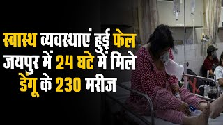 Jaipur में 24 घंटे में Dengue के 230 मरीज   दो दिन में 5 की मौत और 30 की स्थिति गंभीर