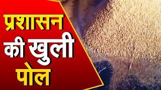 Sonipat: प्रशासन की खुली पोल, नई अनाज मंडी में हजारों क्विंटल धान चढ़ी बारिश की भेट