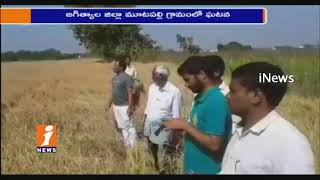 Farmer Set Fire On His Own Paddy Crop over Huge In Jagtial | iNews