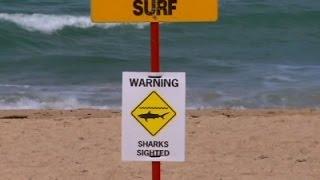 Raw- Surfer's Shark Scare Closes Sydney Beach News Video