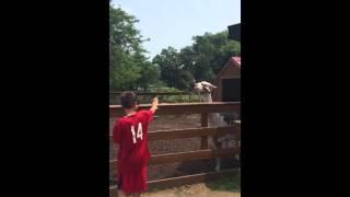 Llama Spits on Scared Kid