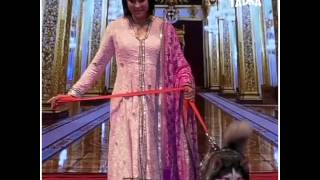 Bollywood celebs Ramp walk with dogs