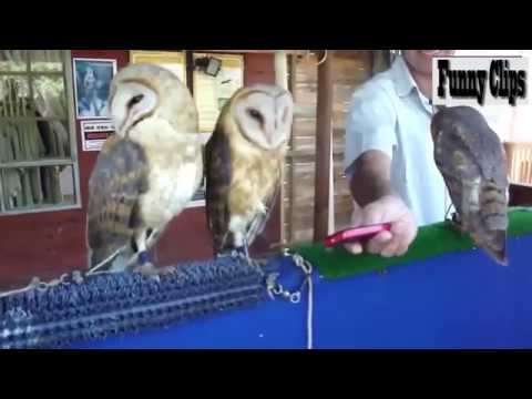 Funny Video   Funny Animals   Cute Owl Videos Compilation+ - Funny+ Videos