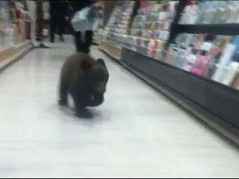 Raw- Bear Cub Strolls Through Oregon Drug Store News Video
