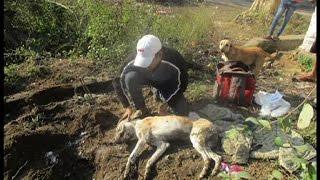 कुत्ते की हत्या में चार पर मामला दर्ज