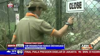 Kabut Asap Ancam Habitat Orangutan