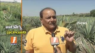 Prickly Pear Cactus Plants Agriculture In Kothwalguda Village   Ranga Reddy   iNews
