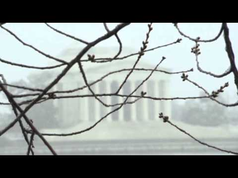 Flurries Blanket DC, Cherry Blossoms News Video