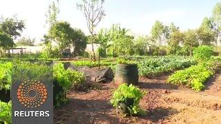 Kenya farming's organic new wave News Video