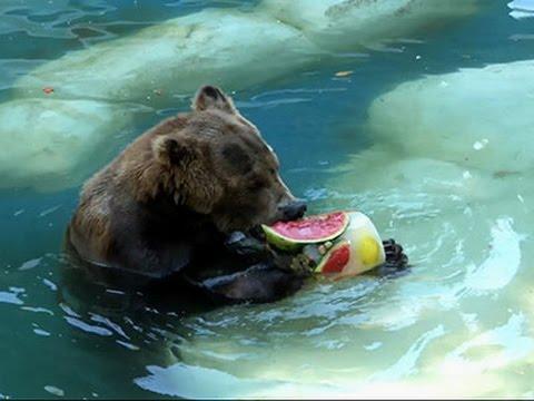 Raw- Zoo Animals Keep Cool in Hot Brazilian Sun News Video