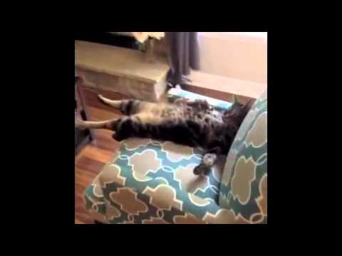 Funny Cats Videos -  Cats Funny
