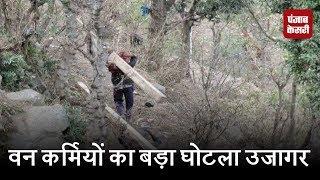 वन कर्मियों का बड़ा घोटला उजागर, लालच के लिए पेड़ों की करवा रहे कटाई
