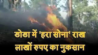 डोडा में 'हरा सोना' राख, लाखों रुपए का नुकसान