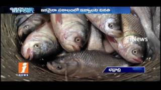 Fisherman's Suffer With Fish farming In Bhadradri Kothagudem  | Ground Report | iNews