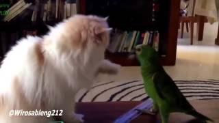 Video Lucu - Kucing Bermain Dengan Burung Kakak Tua