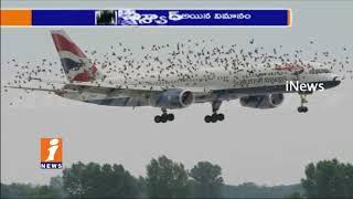 Strange Birds Attacks On British Airways Flight | Emergency Landing In China | iNews