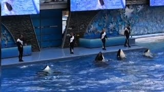 SeaWorld to Stop Breeding Orcas News Video