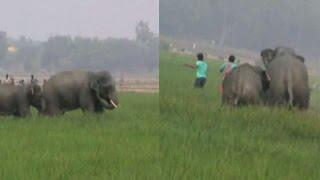 Wild elephants run amok in Burdwan, attack villagers