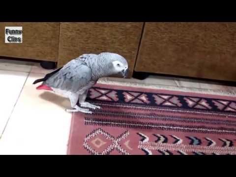 Watch Funny Videos Funny Animal Funny Parrots Annoyi Video Id