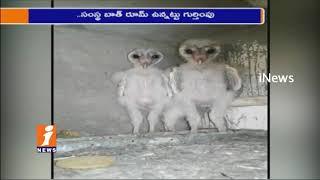 Alien Type Birds Found in Construction Building in Vizag | iNews
