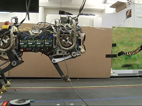 MIT's Cheetah Robot Runs, Leaps and Inspires News Video