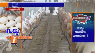 Eggs Price Increases In Rajahmundry | Poultry Industry Express Happy | iNews