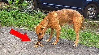 FEEDING SCARED HOMELESS DOGS IN DIWALI