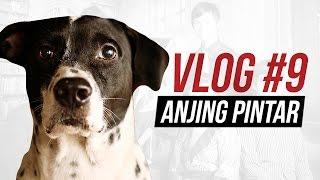 ANJING YANG LEBIH PINTAR DARI MAJIKANNYA - OnVlog #9
