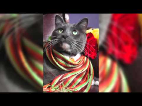 """Search on for """"catnapped"""" Colorado Hotel Cat News Video"""
