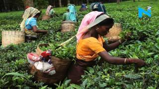 Budget 2016-17- Government may give some respite to tea industry News Video